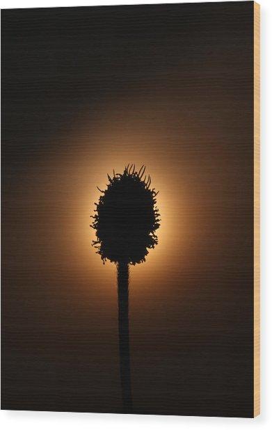 Hidden Sun Wood Print by Joe Sampouw