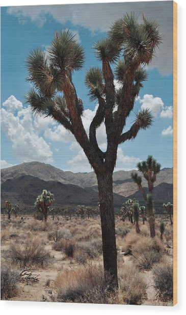 Hidden Valley Joshua Tree Portrait Wood Print