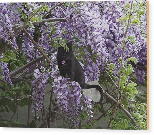 Hiding In The Wisteria Wood Print by Carole Boyd