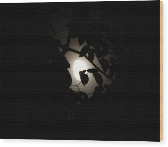 Wood Print featuring the photograph Hiding - Leaves Over Moon by Menega Sabidussi