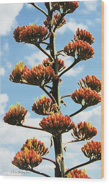 High Country Red Bud Agave Wood Print