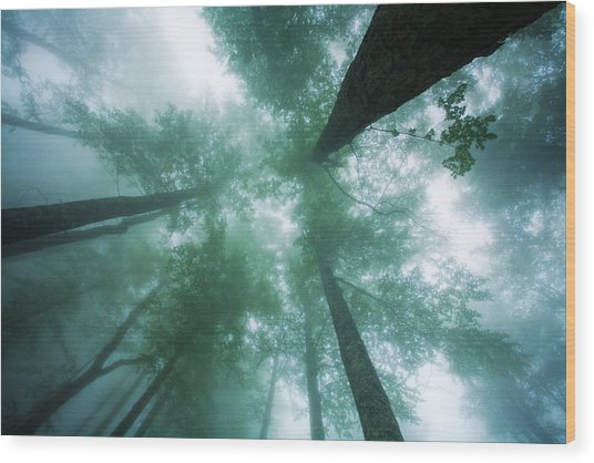 High In The Mist Wood Print