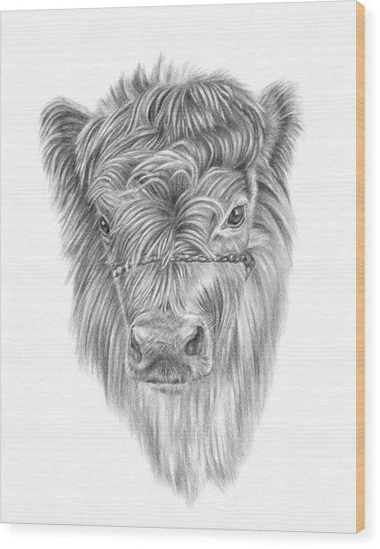 Highland Calf Wood Print