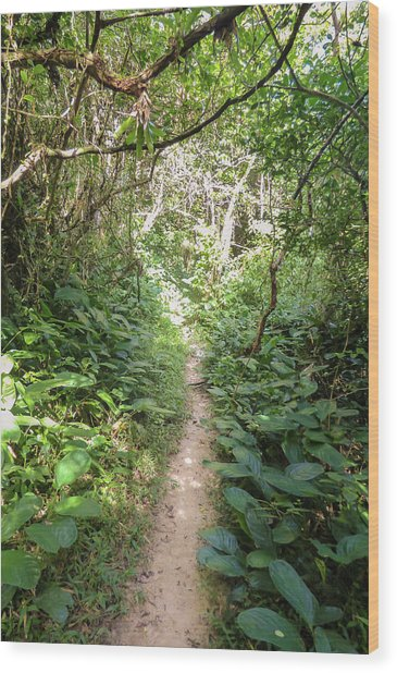 Hiking Path In The Atlantic Forest Wood Print