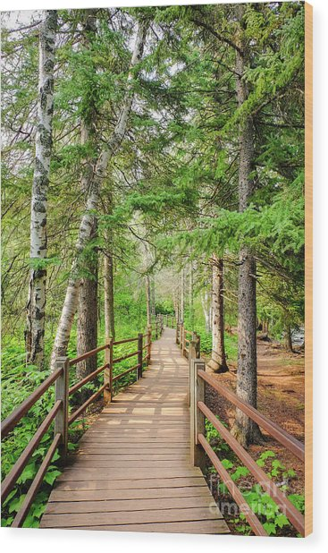 Hiking Trail Wood Print