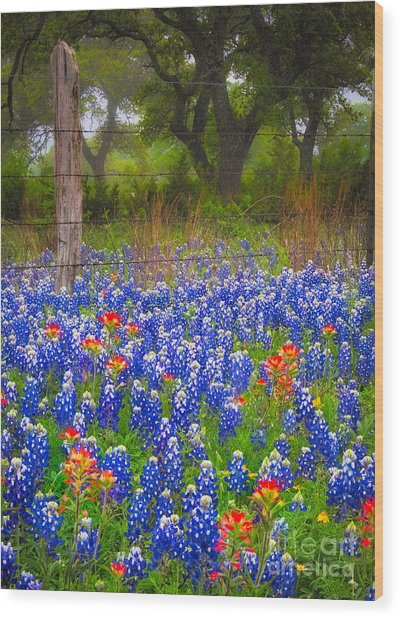 Hill Country Forest Wood Print