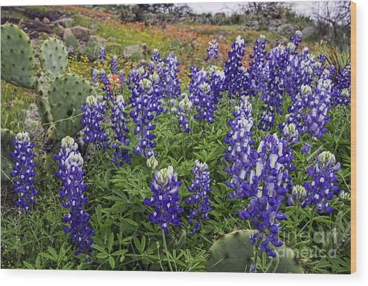Hill Country Palette Wood Print