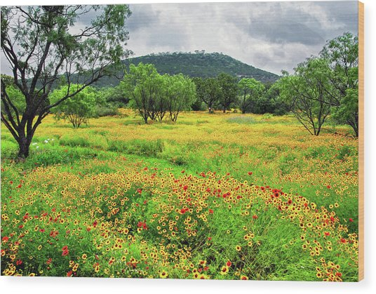 Hill Country Wildflowers Wood Print