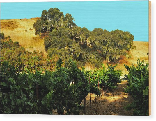 hill side vineyard 'n Oaks Wood Print