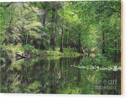 Hillsborough River Vista Wood Print