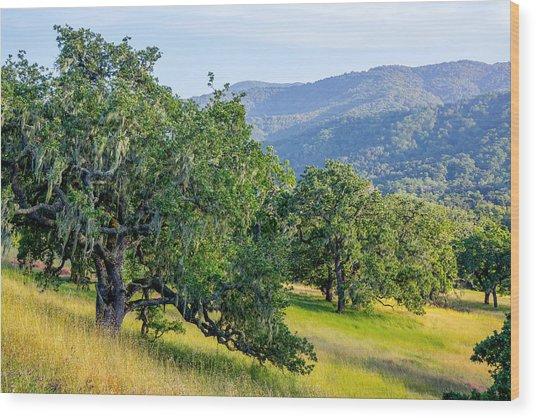 Hillside Oaks Wood Print