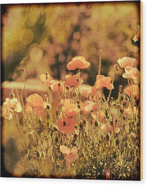 Hillside Poppies And Sunset Wood Print