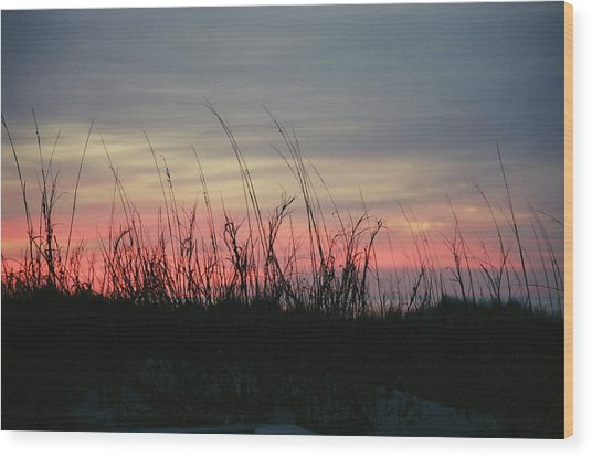 Hilton Head Grass At Sunrise Wood Print