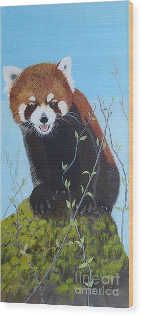 Himalayan Red Panda Wood Print