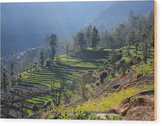 Himalayan Stepped Fields - Nepal Wood Print