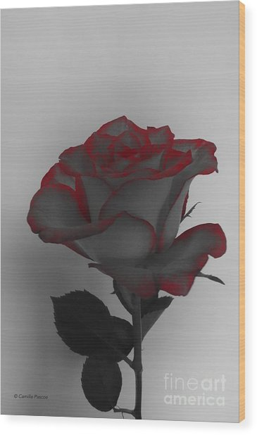 Hints Of Red- Single Rose Wood Print