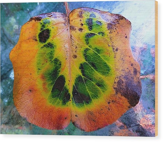 Hippie Leaf Wood Print