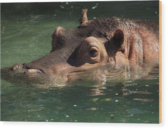 Hippopotamus In Water Wood Print