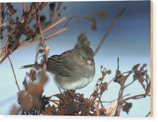 His Eye Is On The Sparrow Wood Print by Richard Oliver