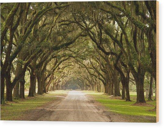 Historic Live Oak Trees Wood Print