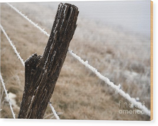 Hoarfrost And Fence Wood Print by Fred Lassmann