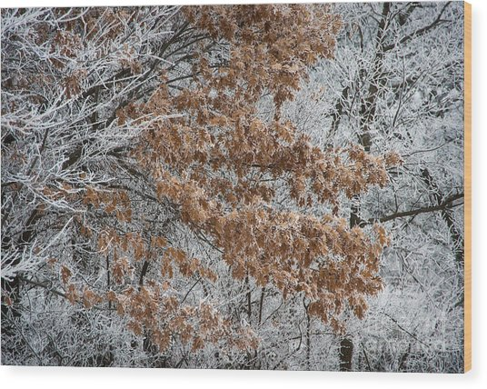 Hoarfrost Trees Wood Print by Fred Lassmann