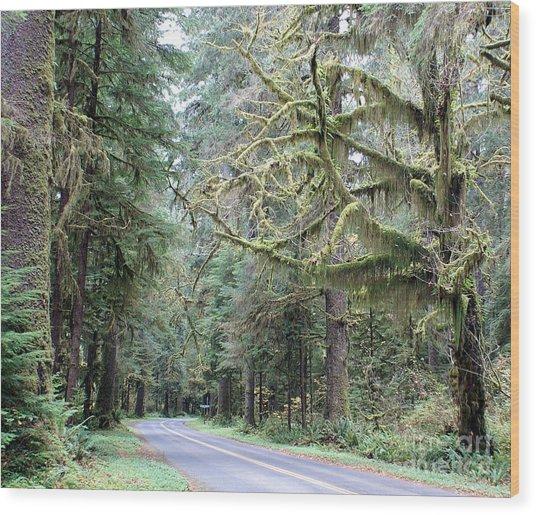 Hoh Rain Forest Road Wood Print