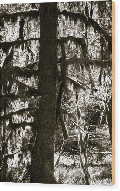 Hoh Rain Forest Wood Print by Sonja Anderson