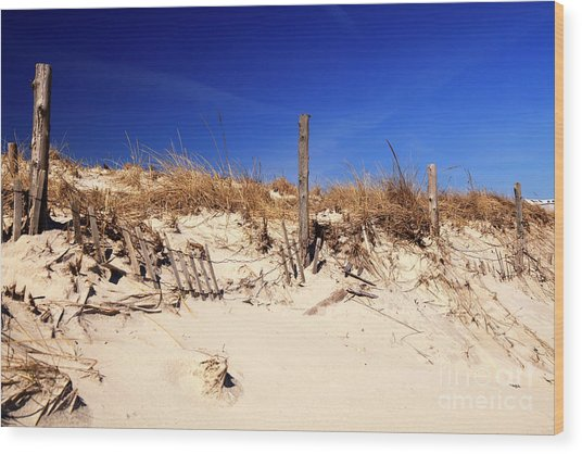 Holgate Beach Dune On Long Beach Island Wood Print by John Rizzuto