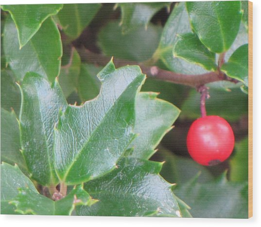 Holly Berry Wood Print by Sylvia Wanty