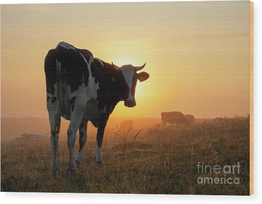 Holstein Friesian Cow Wood Print