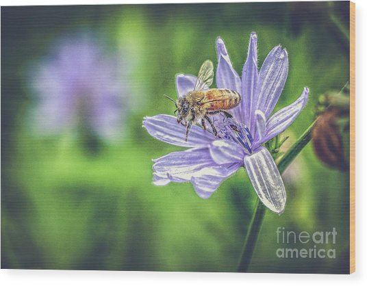 Honey Bee And Flower Wood Print