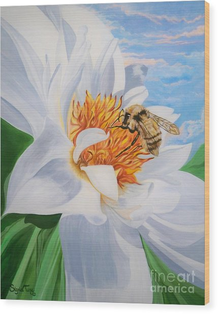 Flygende Lammet Productions     Honey Bee On White Flower Wood Print