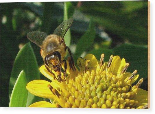 Honey Starts Here Wood Print