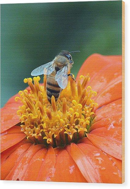 Honeybee On Orange Flower Wood Print