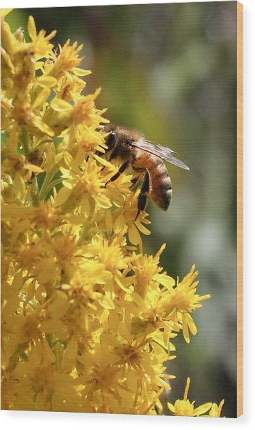 Honeybee On Showy Goldenrod Wood Print