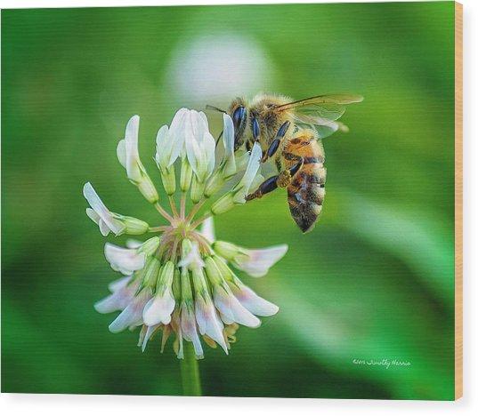 Honeybee On White Clover..... Wood Print