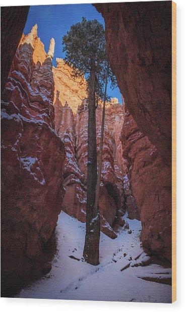 Hoodoos Of Bryce Wood Print