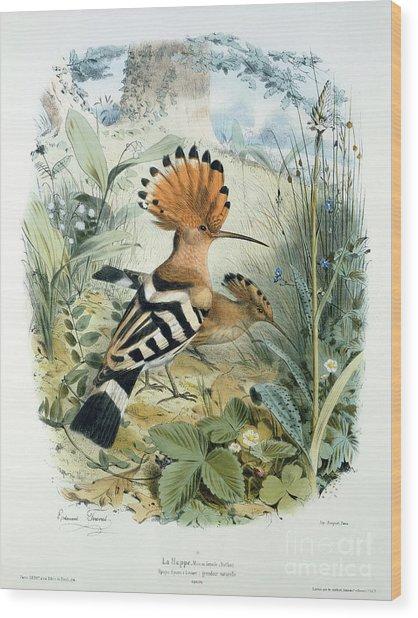 Hoopoe Wood Print