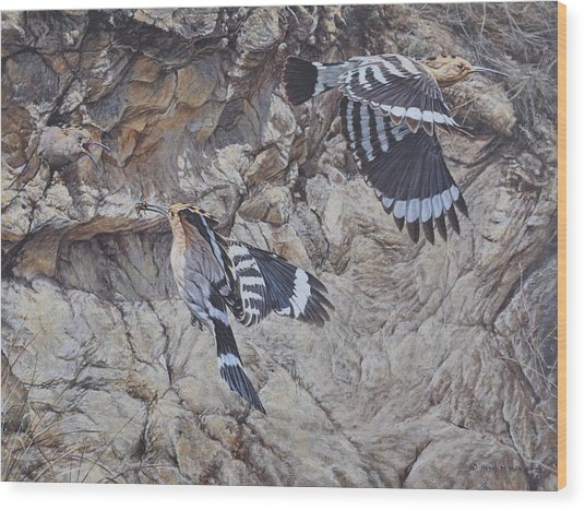 Hoopoes Feeding Wood Print