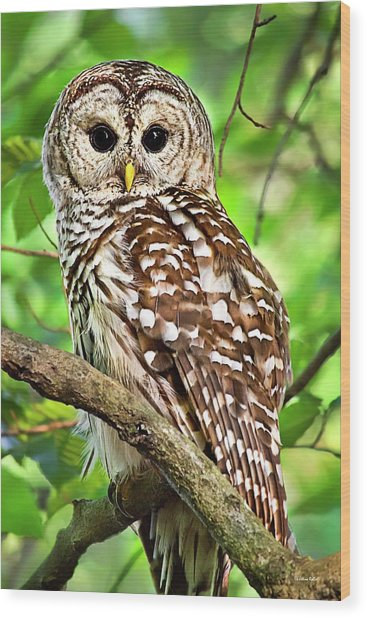 Wood Print featuring the photograph Hoot Owl by Christina Rollo