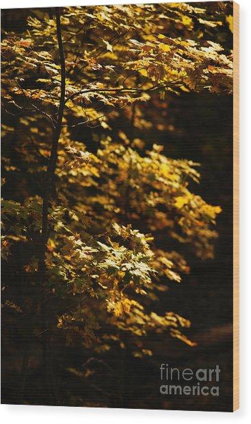 Hope Leaves Wood Print