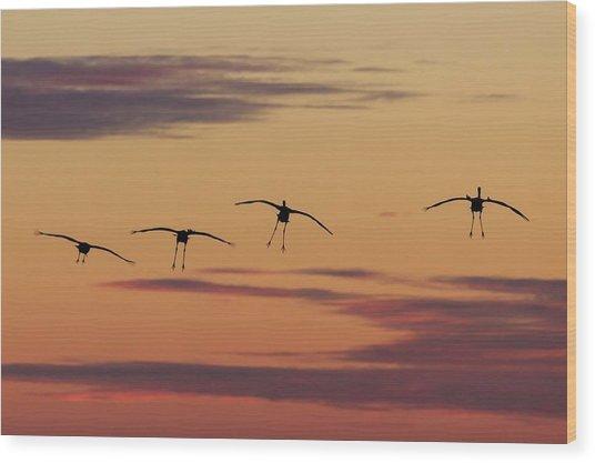 Horicon Marsh Cranes #4 Wood Print