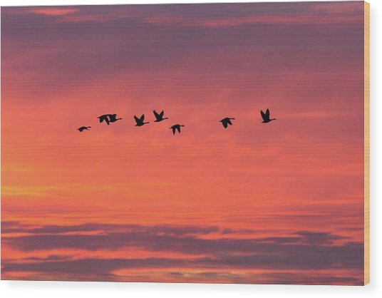 Horicon Marsh Geese Wood Print