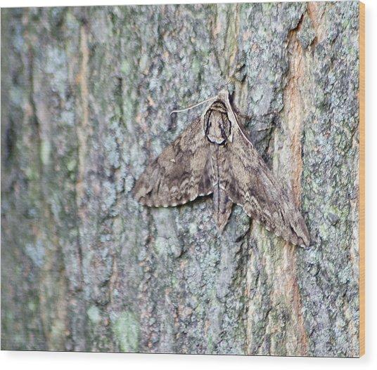 Hornworm Moth Wood Print
