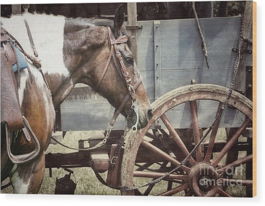 Horse And Wheel Wood Print by Steven Digman
