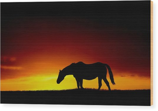 Horse At Sunset Wood Print