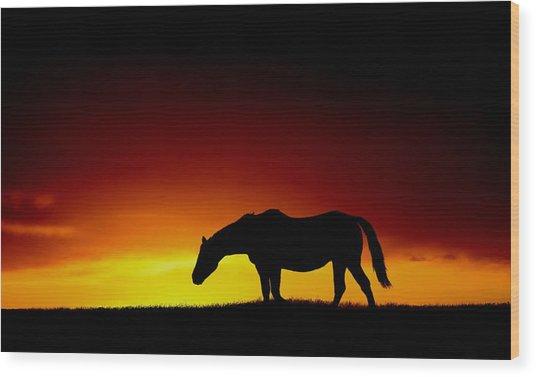 Horse At Sunset Wood Print