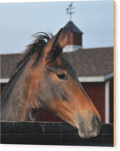 Horse Wood Print by Brian Foxx