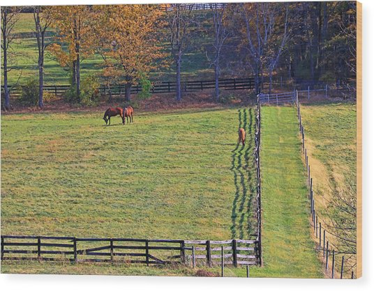 Horse Country # 2 Wood Print